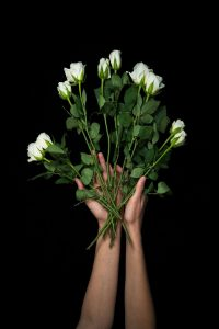 Two hands holding a bunch of long stemmed white roses on a black background.